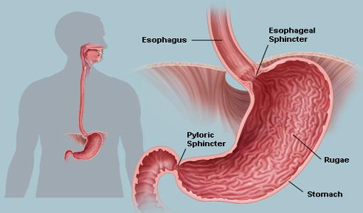 ألف باء: أمراض المعدة وجهاز الهضم