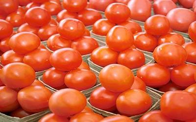 دراسة: الطماطم العضوية «أفضل» من مثيلتها التقليدية