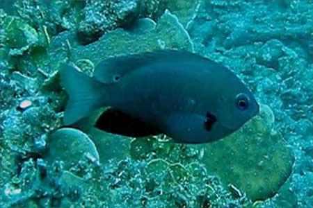 اكتشاف 1500 كائن بحري جديد في عام واحد