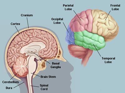 طرق سهلة لزيادة قوة الدماغ
