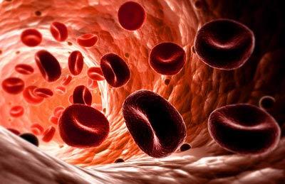 بروتين يساعد على ضخ الدم