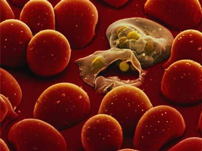 مادة فعّالة لمكافحة الملاريا
