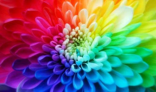 «من أحب تراب وطنه» رأى فيه كل الألوان