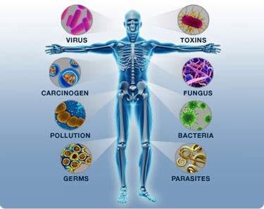 من عجائب جهاز المناعة في جسم الإنسان