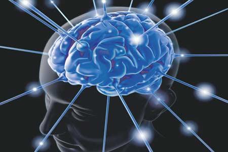 العلماء يتوصلون لأحدث خريطة ثلاثية الأبعاد للمخ