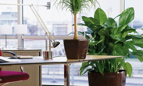 النباتات بمقر العمل ترفع إنتاجية الموظفين