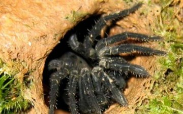 أوباما.. اسم نوع جديد من العناكب