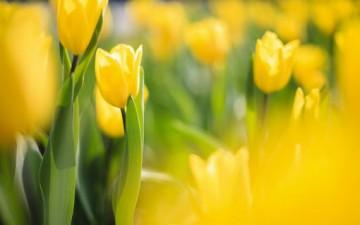 اللون الأصفر في علم النفس