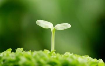 الفطرة السليمة كالنبات الطيب