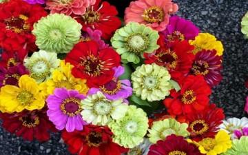 سحر الزهور في علاج الأمراض