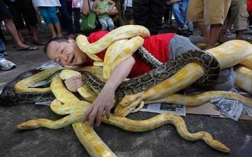 رجل يلف مجموعة من الثعابين حوله احتفالا بالعام الجديد