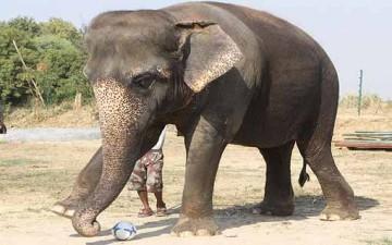 الفيلة مايا صديقة الأطفال تتجول بشوارع برلين