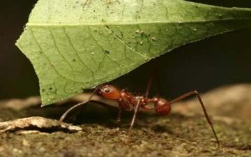 حشرات تتحدى الإنسان في تسجيل الأرقام القياسية!