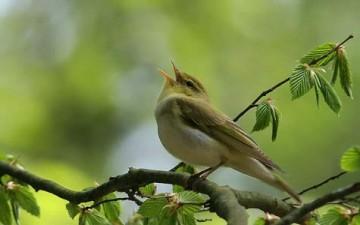 تغريد الطيور يساعد الأطفال على الكلام