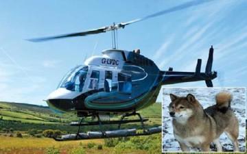 بريطانية تستأجر هليكوبتر لتبحث عن كلبتها