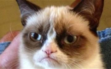 «قطة غاضبة» تحول صاحبتها إلى مليونيرة