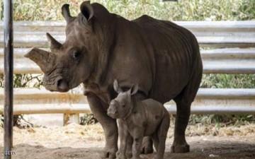 حديقة حيوان تحرق قرون وحيد القرن