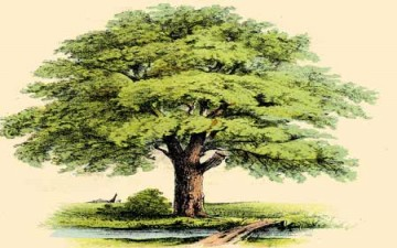 حوار مع شجرة الصنوبر