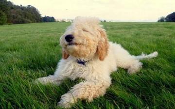 كلب في بيلاروس يرث مليون دولار