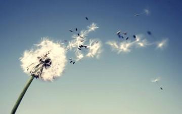 قبض الريح