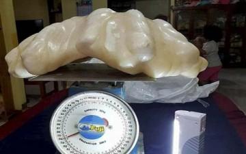 لؤلؤة بحجم بيضة من محارة وزنها 100 كغم