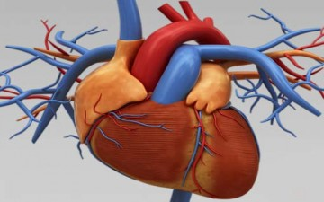 دليل شامل عن ثقوب القلب