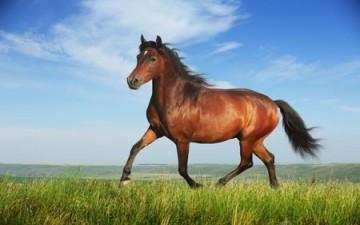 ذكاء الحصان ونجاته