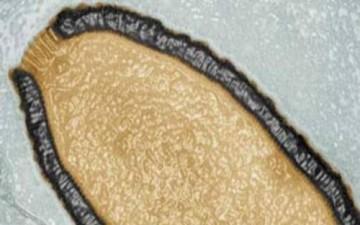 فيروس يستيقظ من سباته بعد 30 ألف سنة