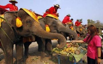 وليمة من الموز والبطيخ للأفيال في تايلاند