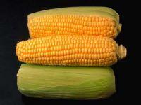 الذرة الصفراء.. علاج ناجع لسوء التغذية